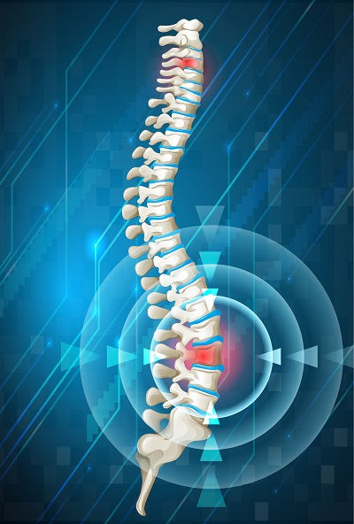 PPT - Spinal Cord PowerPoint Presentation, free download
